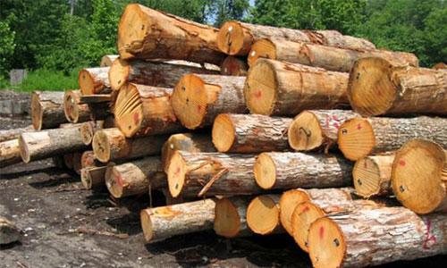 نگاهی به تاریخچه چوب در معماری